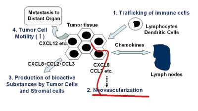 ケモカインのがん病態における役割