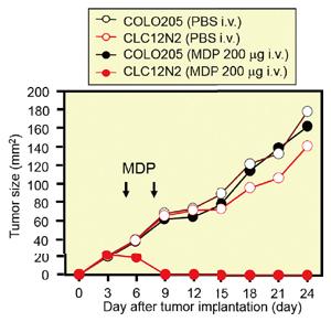 パイロトーシスの誘導によるがん治療モデル。