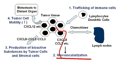 Roles of chemokines in tumor progression and metastasis processes