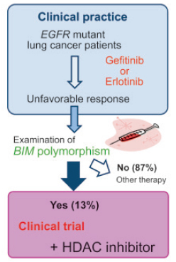 Strategy to overcome BIM polymorphism-associated targeted drug resistance by combined use of HDAC inhibitors